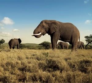 Afrique-Sud-incentives-dans-nation-arc-ciel-F