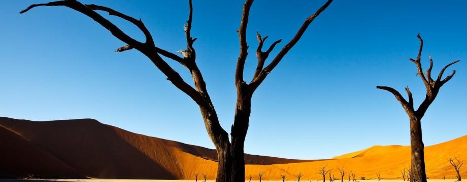 landscape_desert_nature_trees_Namibia_Deadvlei-224657.jpg!d